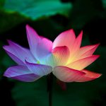 チャクラヨガ瞑想